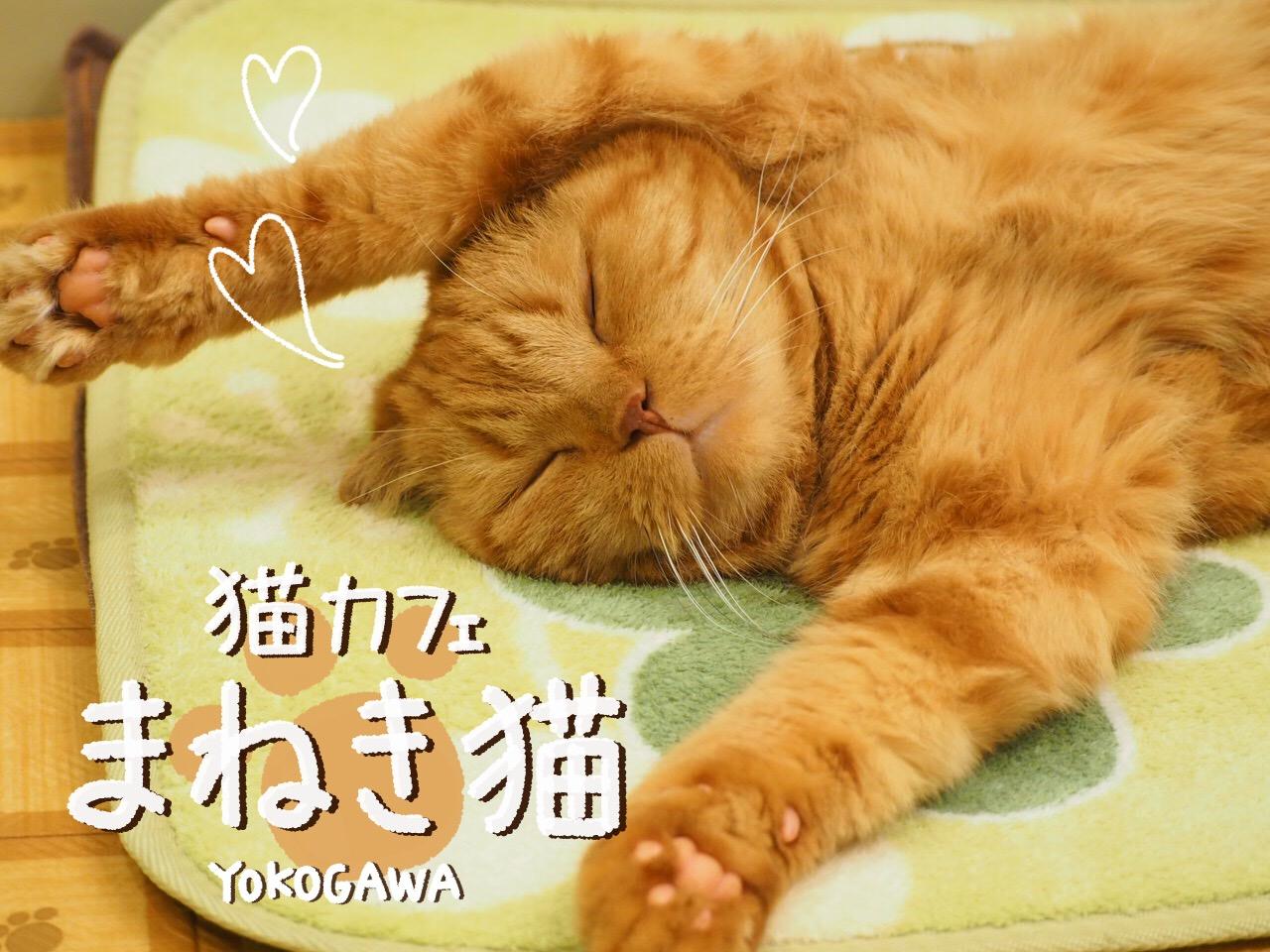 猫カフェ まねき猫