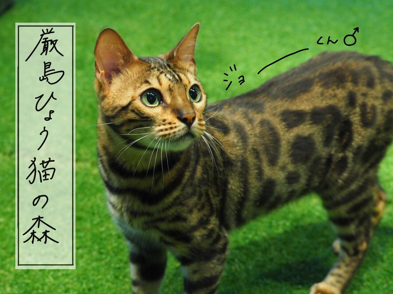嚴島ひょう猫の森
