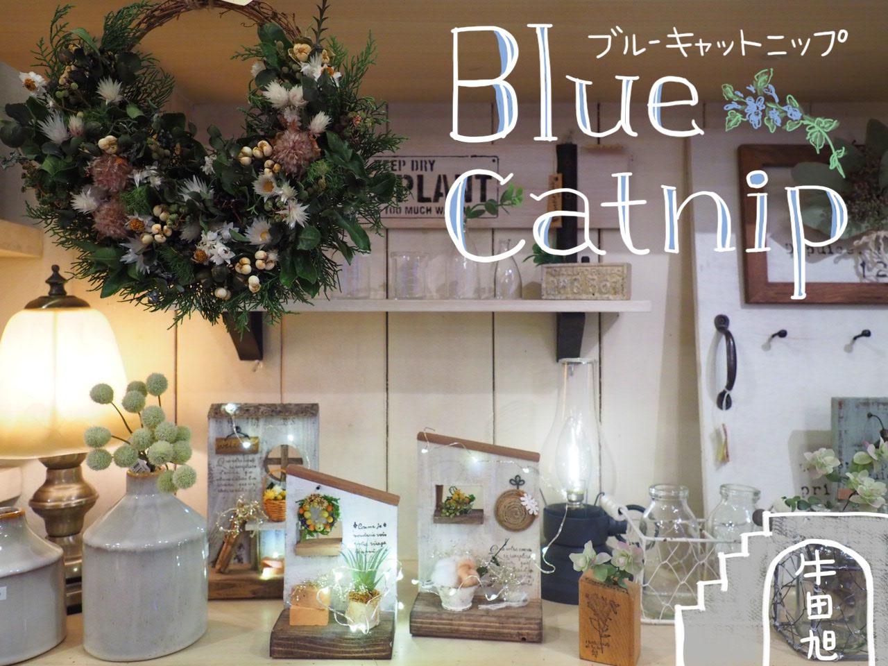 blue catnip